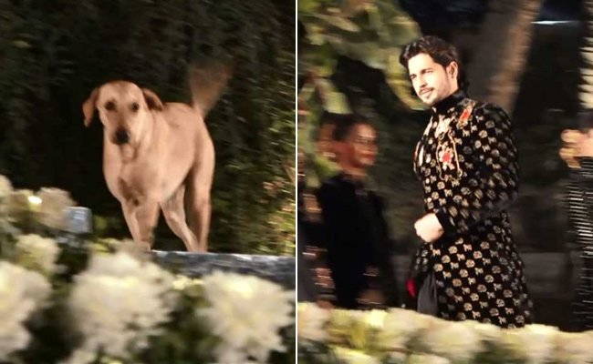 Dog crashes Sidharth Malhotra's ramp walk in hilarious video https://t.co/5hMzrPwbPI
