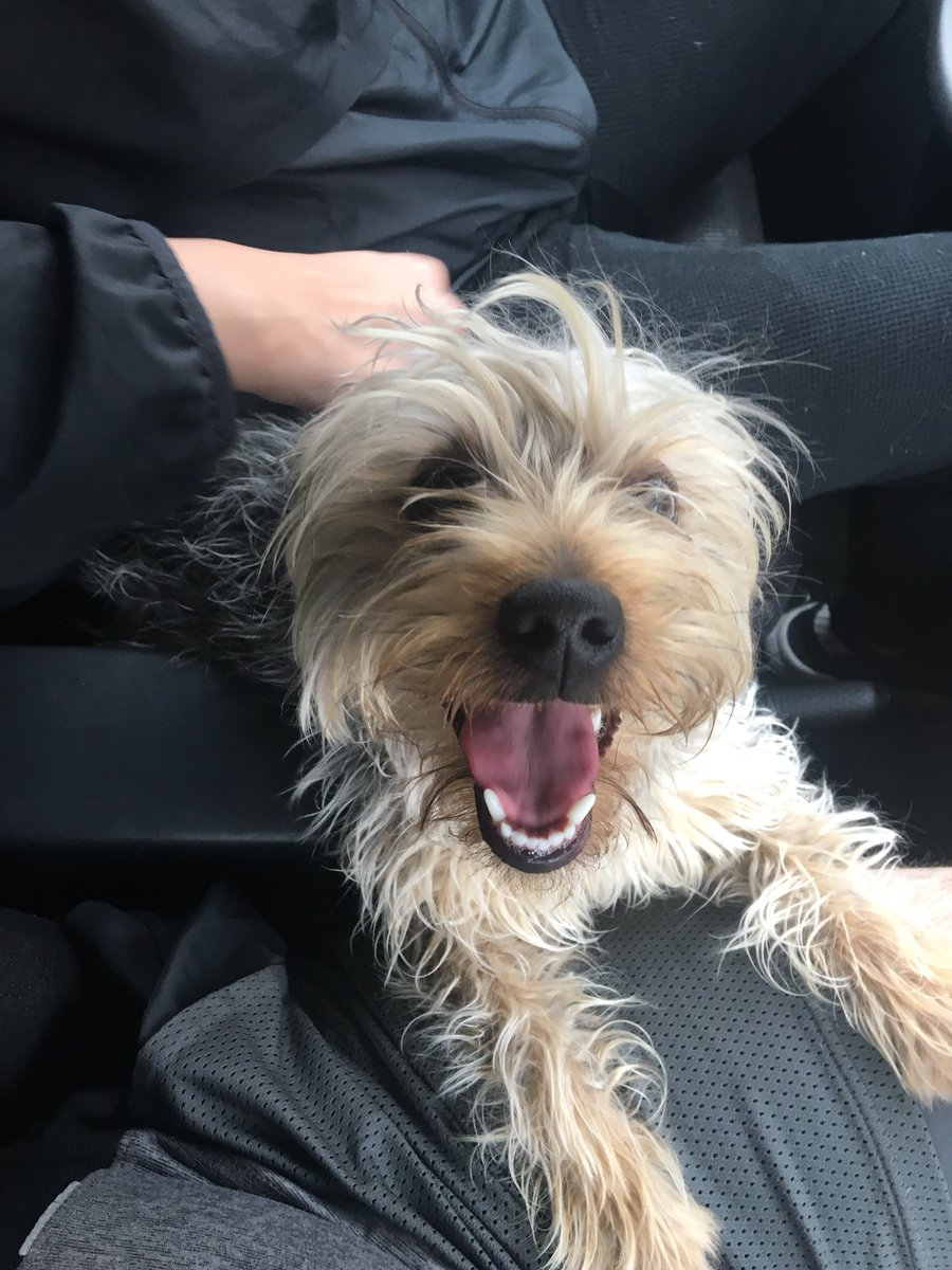 I just found a lost dog in the rain. Anaheim area around Loara/Boardway. Do any of you recognize it? Can you please retweet to find the owner? <br>http://pic.twitter.com/bqyVuOxeXh