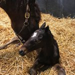 It's a BOY! My first colt is HERE and he's got that signature War Front look!Born: 1/17/19 out of Lady June Bug (1/2 sister to Palace Malice).Lady June Bug's last foal by Exaggerator sold for $150K as a Weanling... This little guy is going to be a star. 🌟🏇