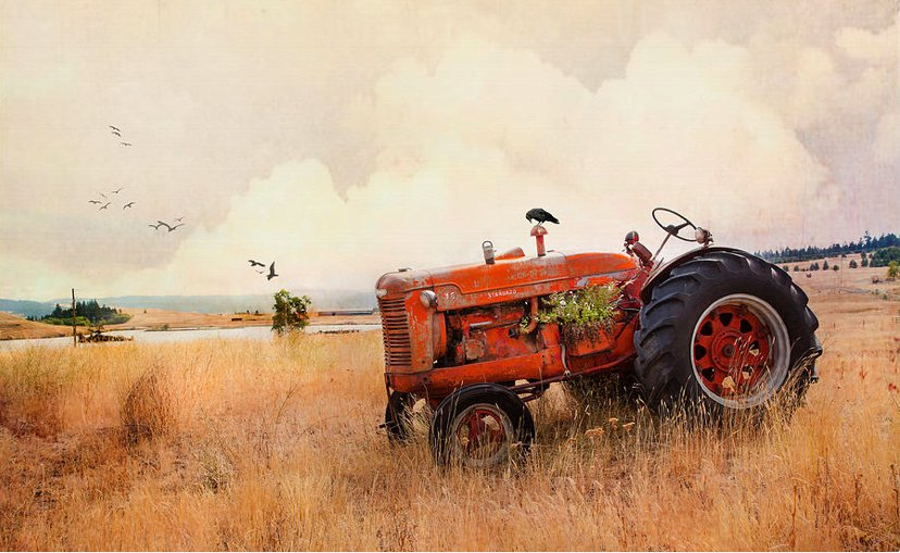 Long Lake Tractor Kamloops https://theresa-tahara.pixels.com/featured/long-lake-tractor-theresa-tahara.html… Gift ideas and wall art for sale. #Kamloops #tractor #farming #farmers #Ferguson #case #row #country #countrydecor