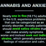 Image for the Tweet beginning: #Cannabis and Anxiety -