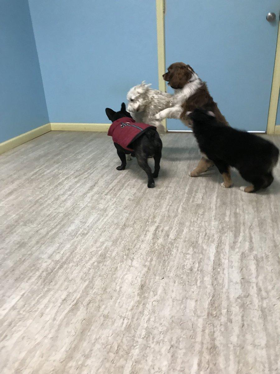 Linus, Wyatt, Tucker, and Gracie play