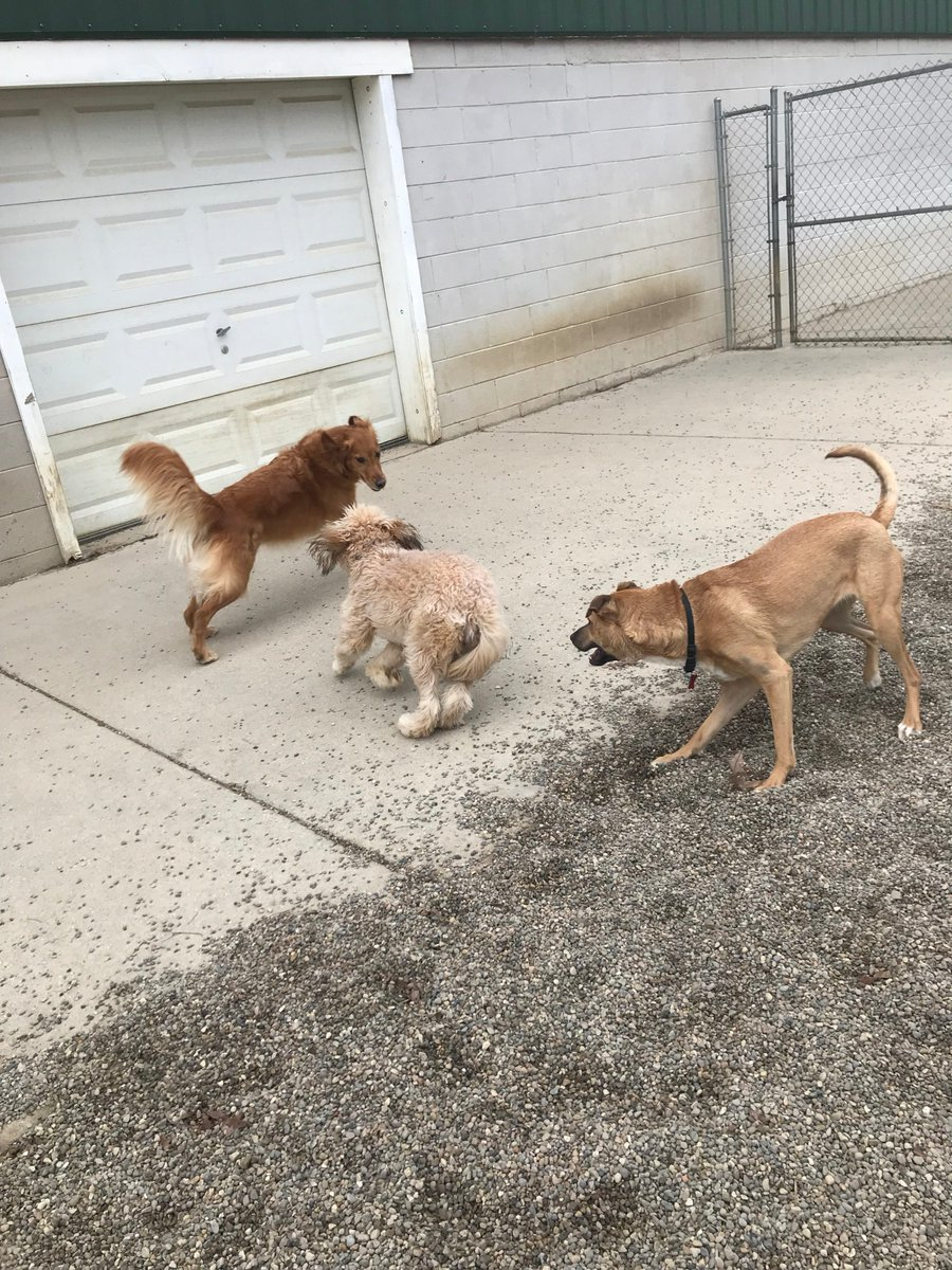 Luna wants to play with Maggie May, Zoe watches
