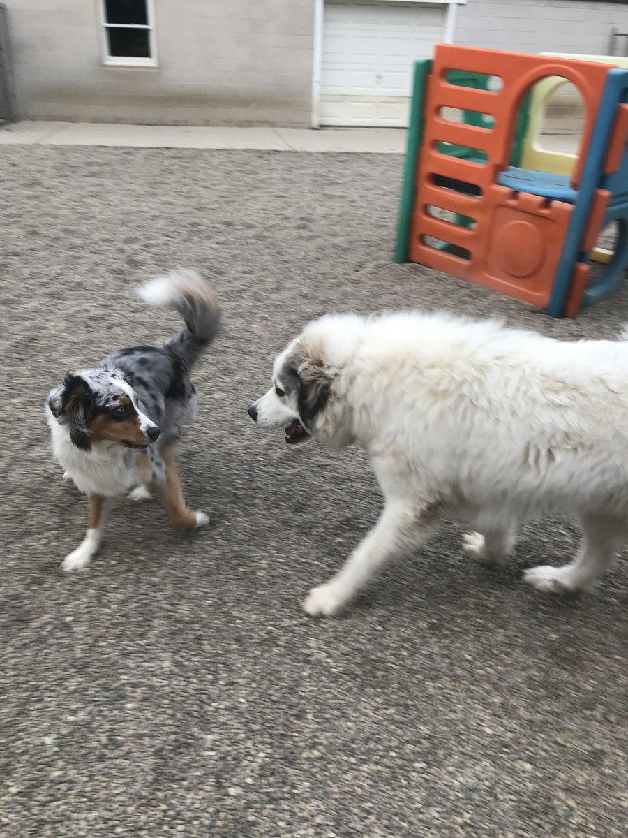 Gerdi wants to get Fergus