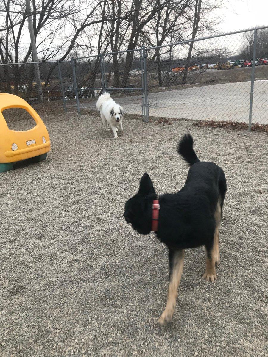Gerdi chases Felix