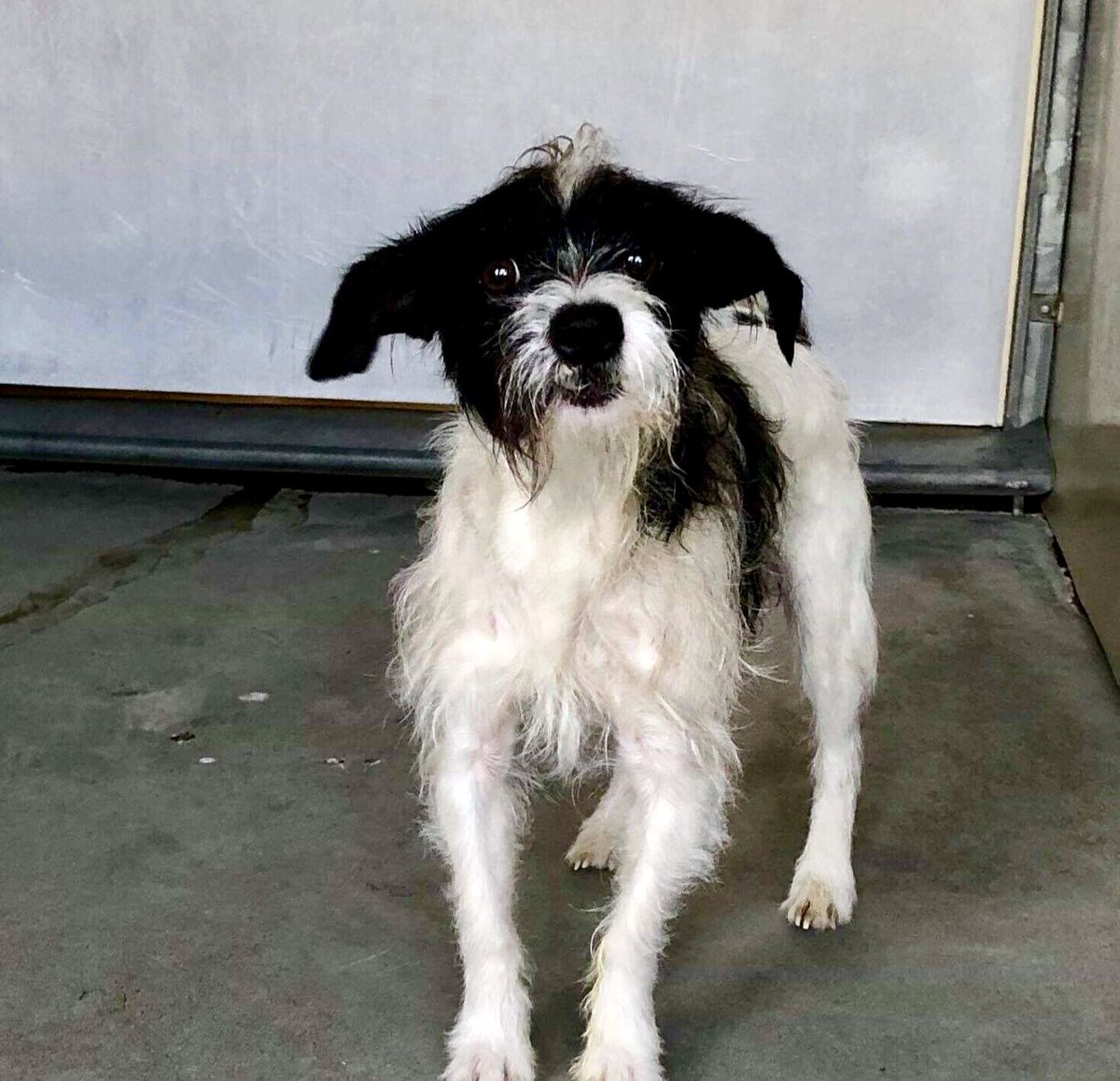 This weekend, plan a visit to your local rescue shelter, where your new best friend is waiting for you :) #adopt #rescue #foster #LucysLaw<br>http://pic.twitter.com/tQCbN1YsDo