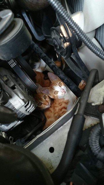 500RT:【話題】「猫バンバン」だけでは救えない場合も、目視確認呼びかけ https://t.co/NaARvFes92  JAFによると、昨年1月に猫が車に入り込み出動したトラブル19件のうち、13件はエンジン始動後に気付いたものだった。