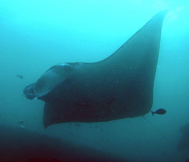 The water is calling me. #scuba #scubadiving #indonesia #labuanbajo #asia #underwater #adventure #sooffwego #traveladdict #divedeep #manta #mantaray #giantmantaray #passportready<br>http://pic.twitter.com/JGdLvMCpgB