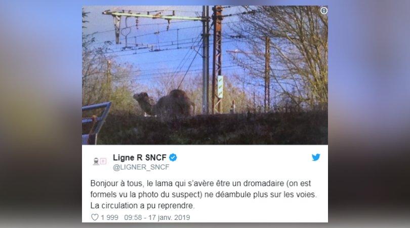 Seine-et-Marne: un dromadaire sur les voies perturbe le Transilien https://t.co/QkLbFXWRcr