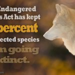 Endangered Species Act Twitter Photo