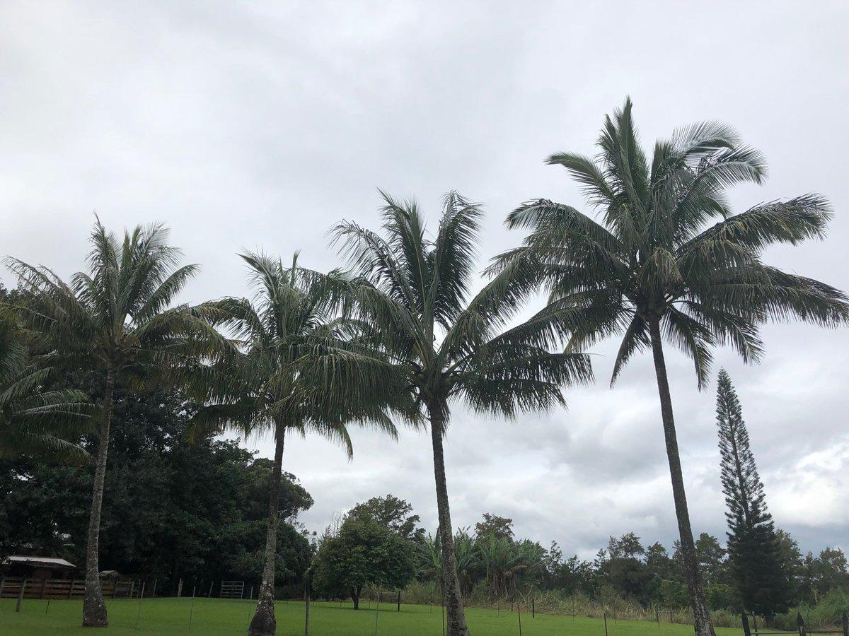 test Twitter Media - Overcast in Haiku, warm and balmy. #cmweather #maui #cloudy https://t.co/OY2OkfCd9E