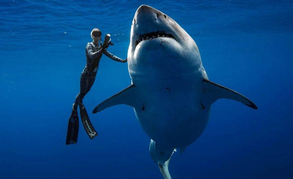 Tubarão-branco gigante é filmado por mergulhadores no Havaí em aparição rara https://t.co/62pYg5FvQF #G1
