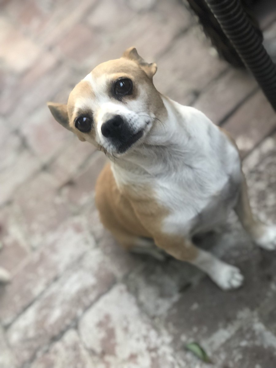 Please RT!! Missing Dog Highland Area. I've had him since 3rd grade. Don't try to pick him up he'll bite. He goes by Sammy. <br>http://pic.twitter.com/l1AickmmqE &ndash; à University Dog Park