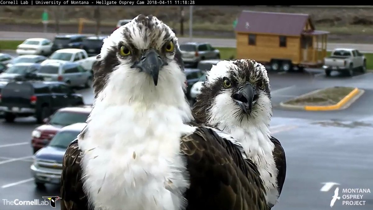 Hellgate Osprey's photo on Today is Friday