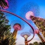 Image for the Tweet beginning: Botanical gardens offer treetop walkways,