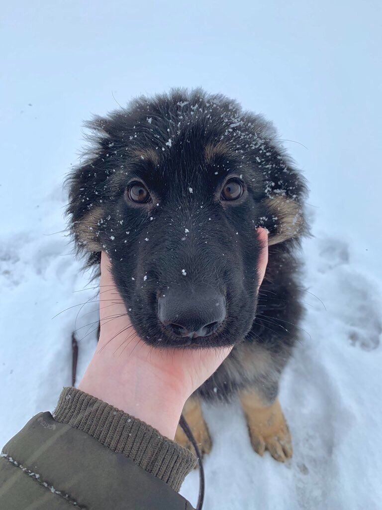 This is Archie. It's his first time in the snow. Was not expecting these chilly levels. Appreciates the toasty chin scritches. 12/10 anytime Archie