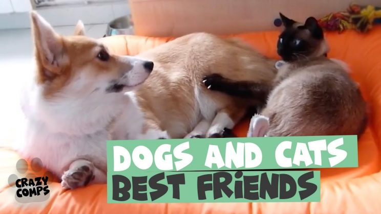 FUNNY DOG and CAT Videos | Cats vs Dogs Compilatio…  http:// dlvr.it/QwwjFx  &nbsp;  <br>http://pic.twitter.com/Orpe57CTP9