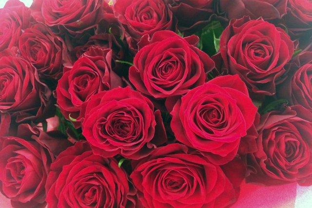 【バラの花言葉 その1】  赤 『あなたを愛する』『熱烈な恋』『無垢で愛らしい』『貞節』  ピンク 『上品』『しとやか』『暖かい心』『満足』  白 『少女時代』『無邪気』『清純』『相思相愛』『尊敬』 https://t.co/j9ilwtspaO
