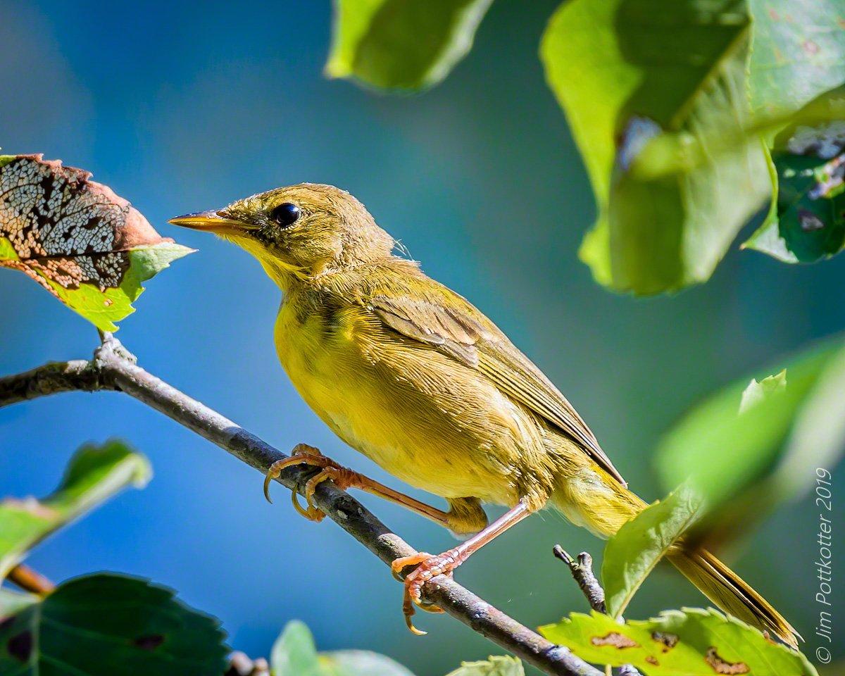 i bird