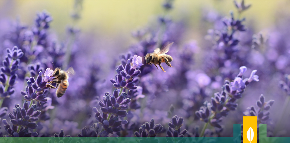 RT @CitiesWNature #DYK that #urbannature, like private & community #gardens, can help the widespread decline of bees  #Nature in #cities has been identified as potential sanctuaries for #bees #CitiesWithNature  More from @dpcarrington on @guardianeco: https://t.co/GSuvgi8IvW
