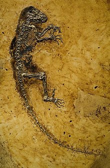 RU Anth Sci's photo on #FossilFriday