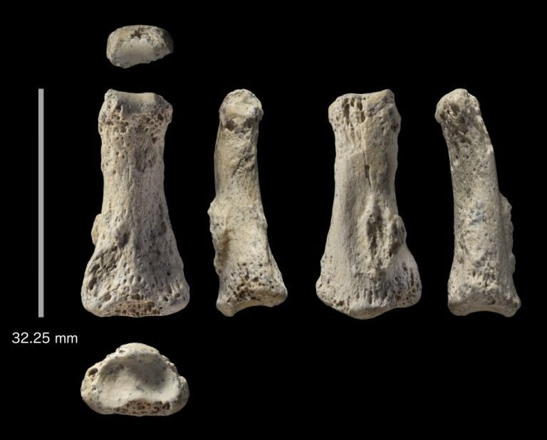 Homo sapiens sylvestris's photo on #FossilFriday