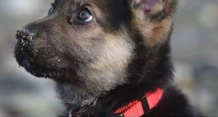 Puppy set to get 100 hugs as community checks off his bucket list >>https://t.co/JqUO3s9s0O
