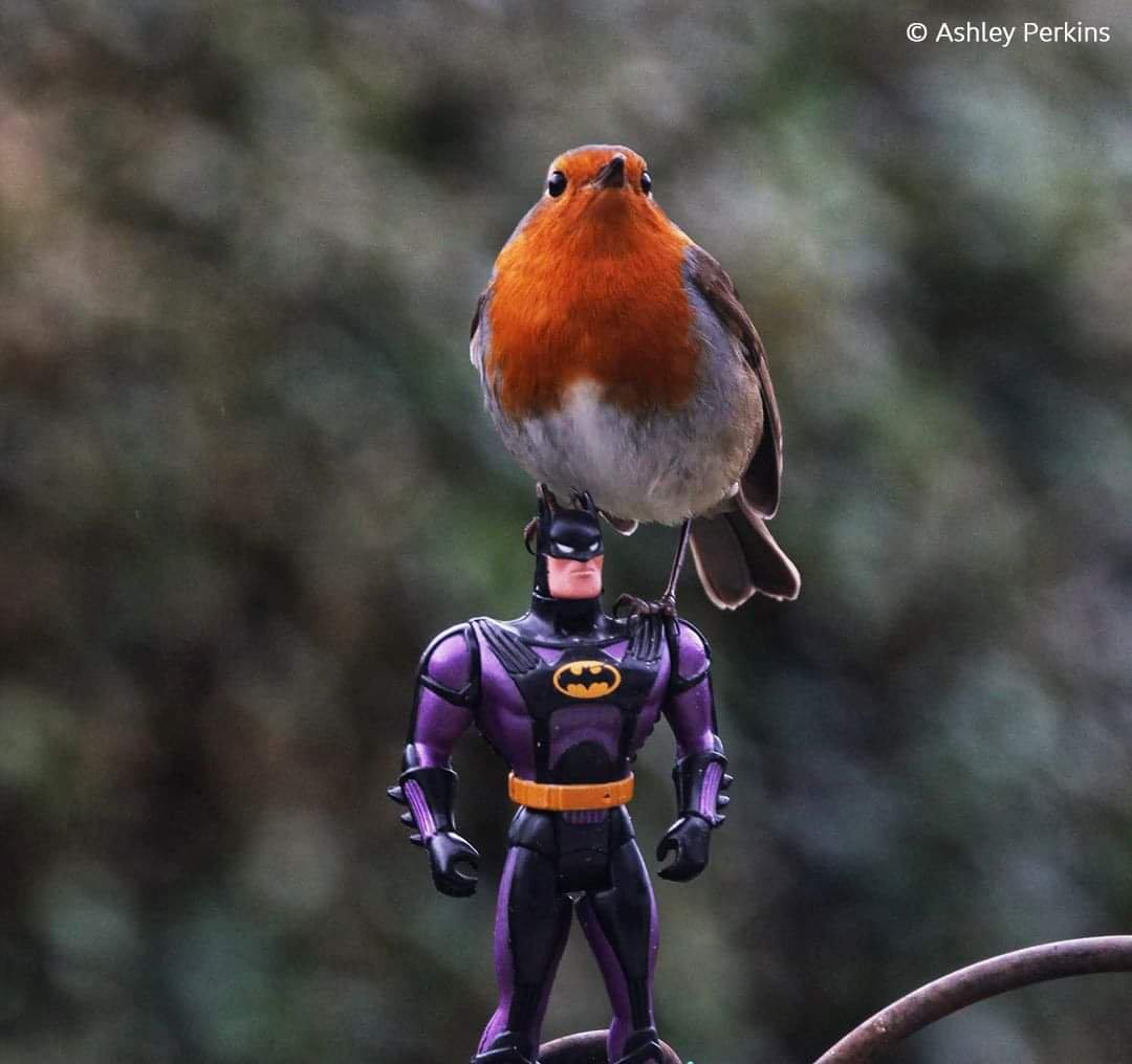 Na na na na na na na na na na na na na na #Batman 🦇
