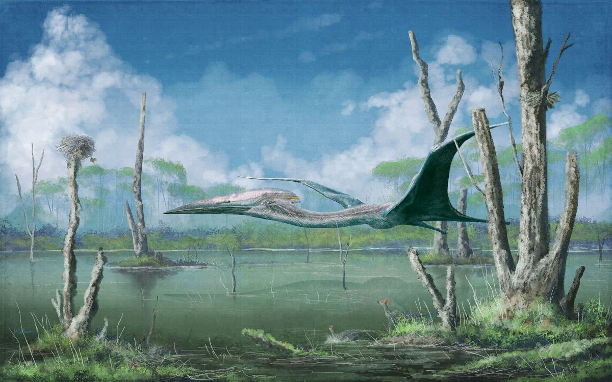 Your periodic reminder that all good data we have on giant pterosaur anatomy and biomechanics points to well developed flight capabilities, even though they were the size of giraffes.  Details:  http:// markwitton-com.blogspot.com/2018/05/why-we -think-giant-pterosaurs-could-fly.html &nbsp; …  #paleoart #FossilFriday <br>http://pic.twitter.com/fCFJciig9J