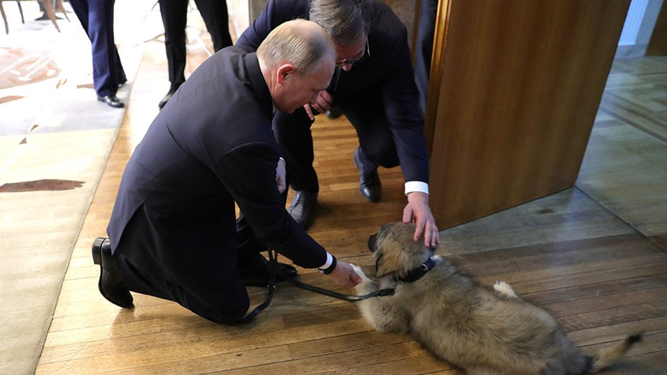 Putin welcomed in Serbia... with a puppy  https://t.co/COaJbtVF6p