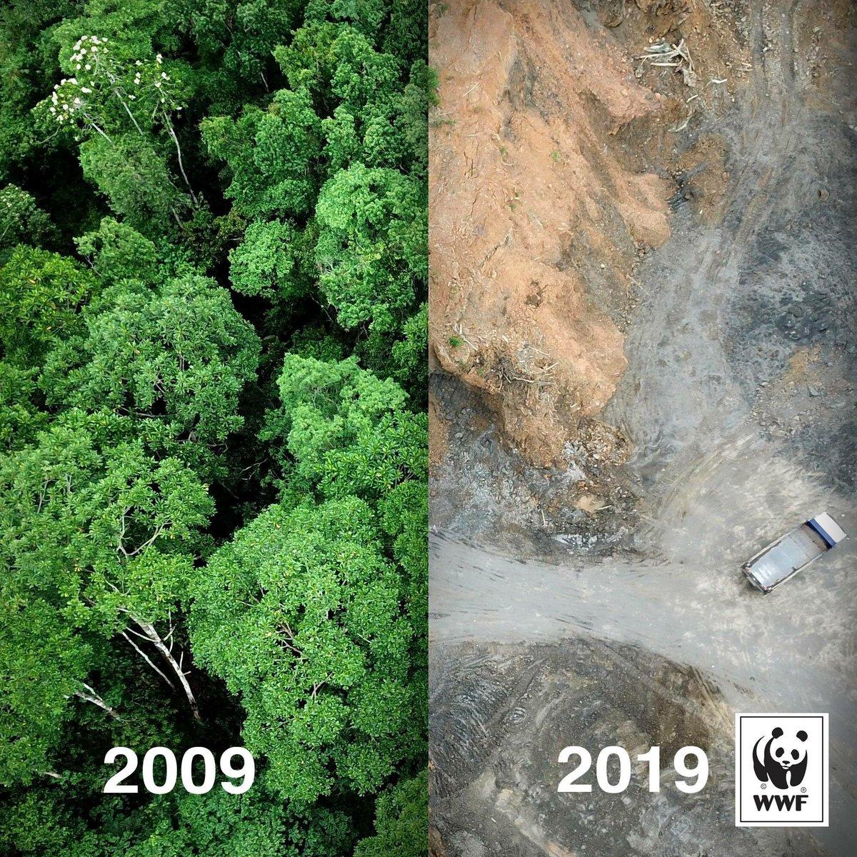 Campagna di sensibilizzazione ambientale del WWF #10yearschallenge su Instagram