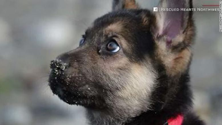 Rescue starts bucket list for dying puppy https://t.co/YYE3lUVs5F