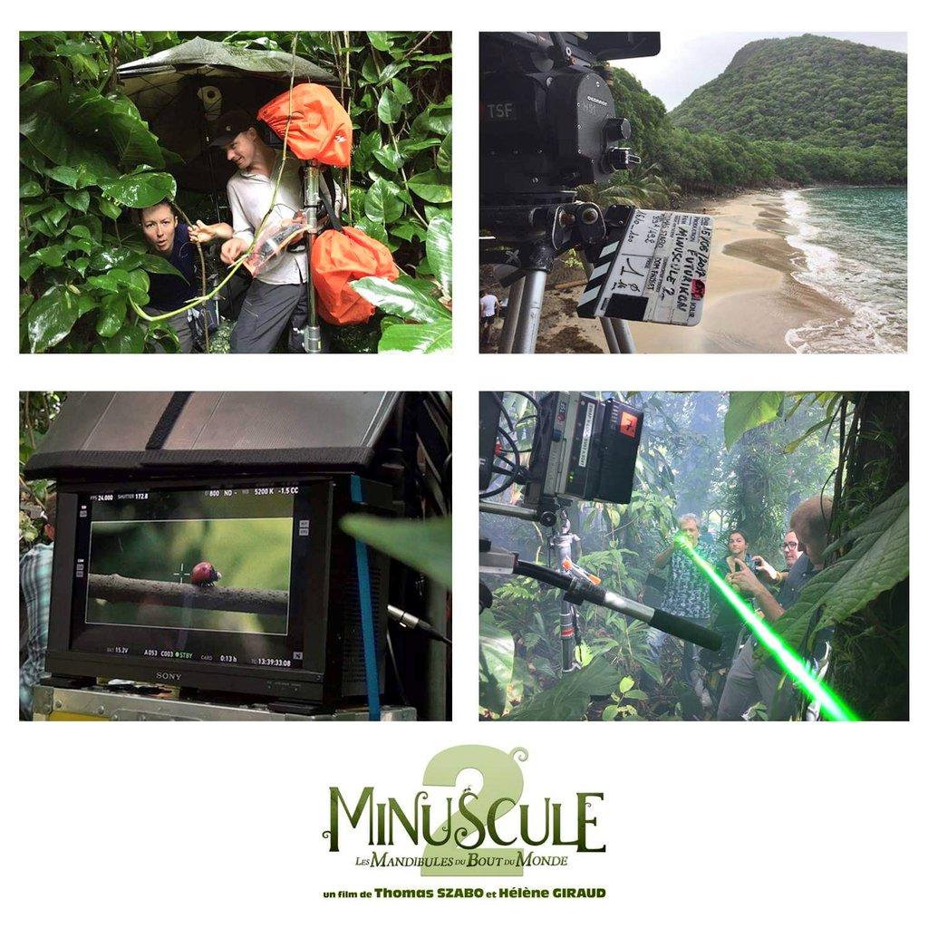 🎬 Les coulisses de la création du gigantesque monde de MINUSCULE 2 : LES MANDIBULES DU BOUT DU MONDE 🐛🦀🐜🐞🦗🕷 Tournage réalisé dans les îles de #Guadeloupe Sortie au cinéma le 30 Janvier #Minuscule2 #Minuscule
