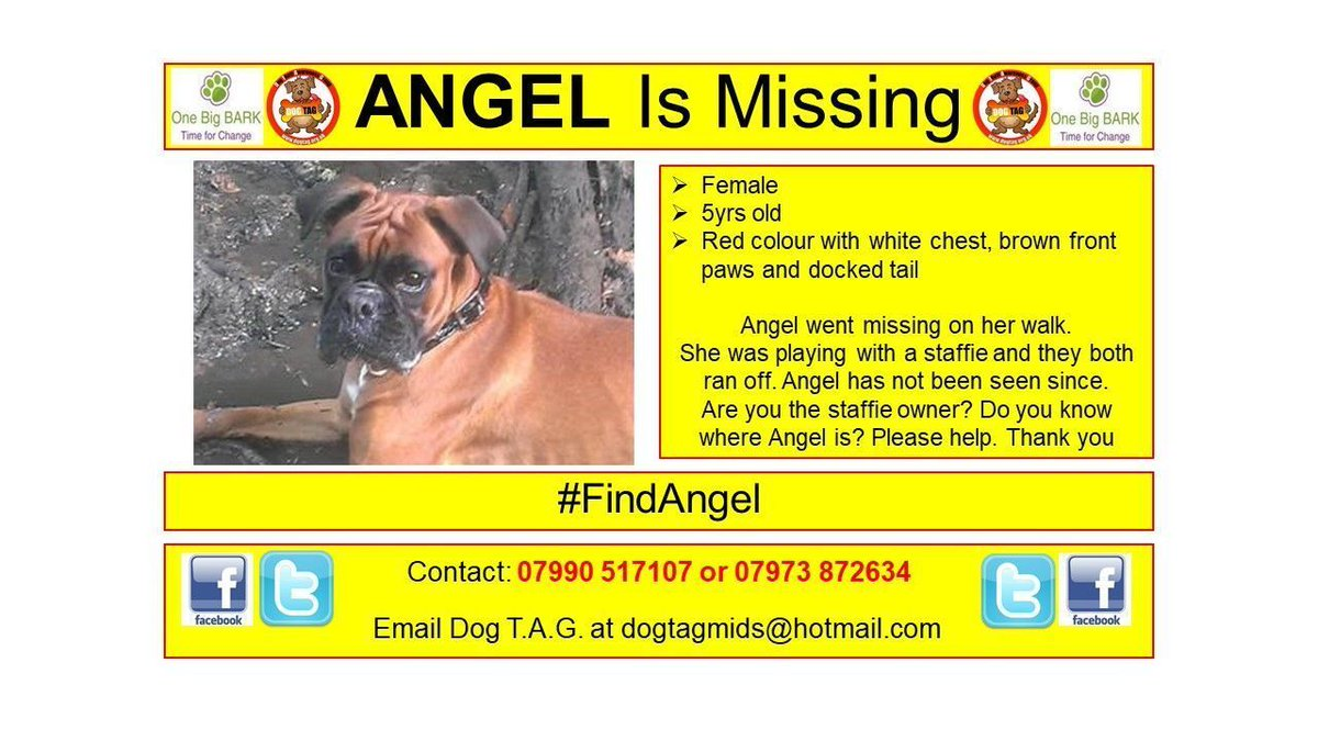Female  5yrs old Red colour with white chest, brown front paws and docked tail  07990 517107 or 07973 872634 #findme #lostdog <br>http://pic.twitter.com/w02m5t6wxE