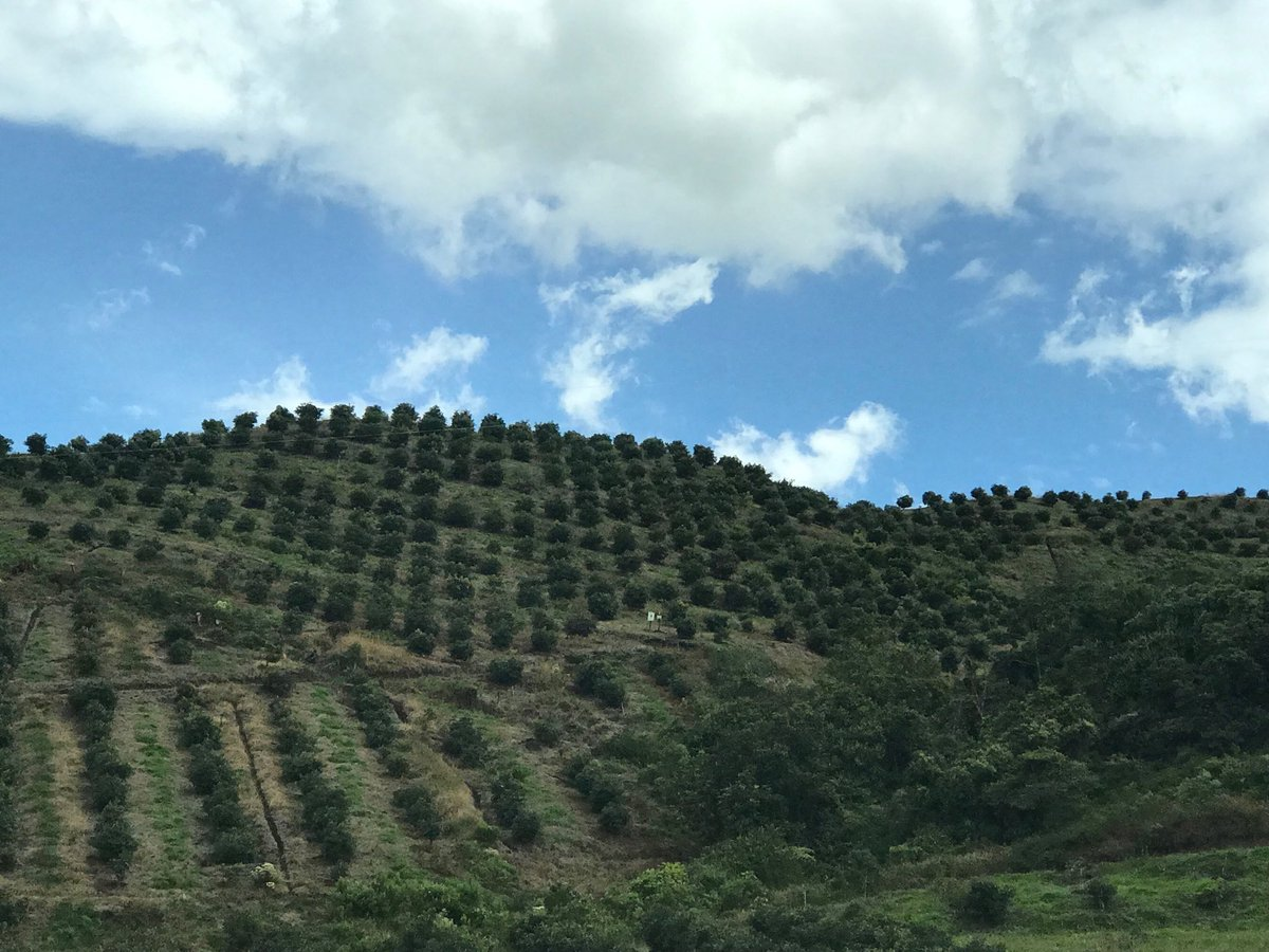 Climate-smart agri development in Sonsón region in #Colombia - #agribusiness bring #jobs and #development to rural communities— #ifcclimate #sonson