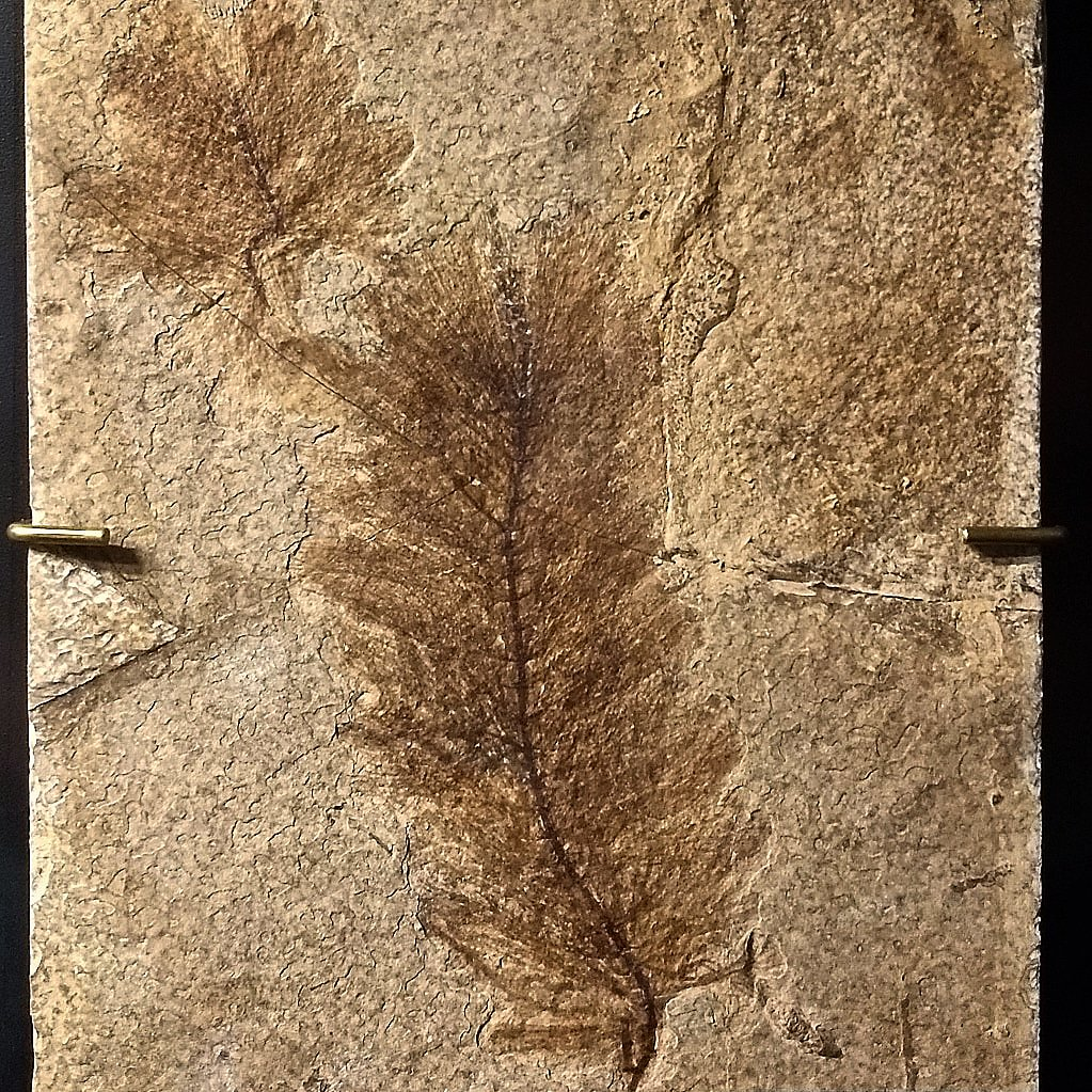 In Defense of Plants's photo on #FossilFriday
