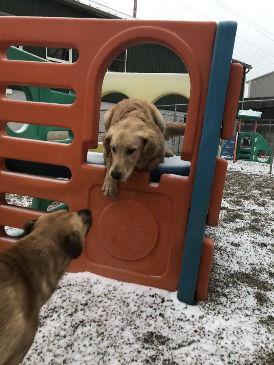 Zoe J asks Gunner to play
