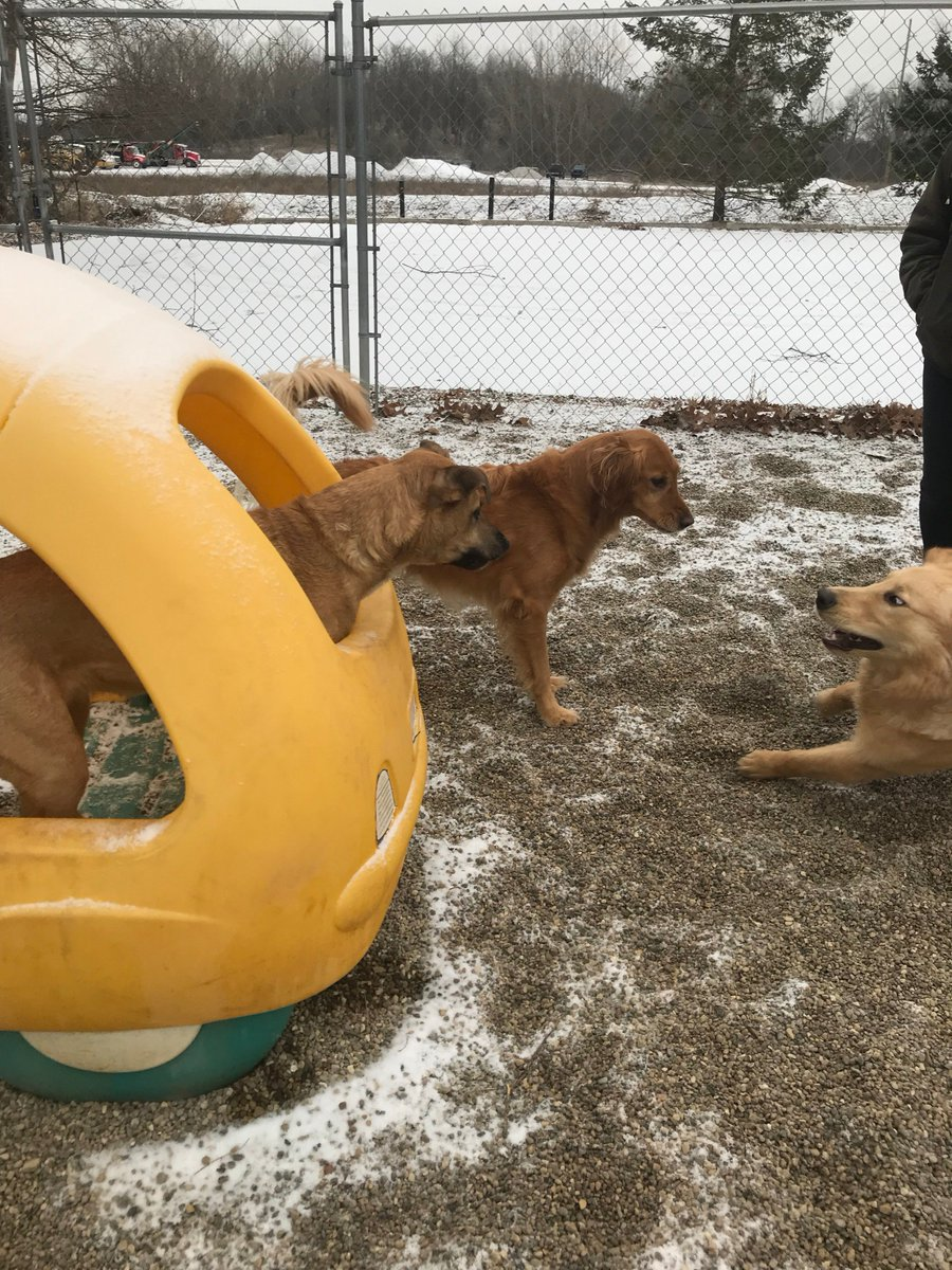 Gunner asks Maggie Mae and Zoe J to race