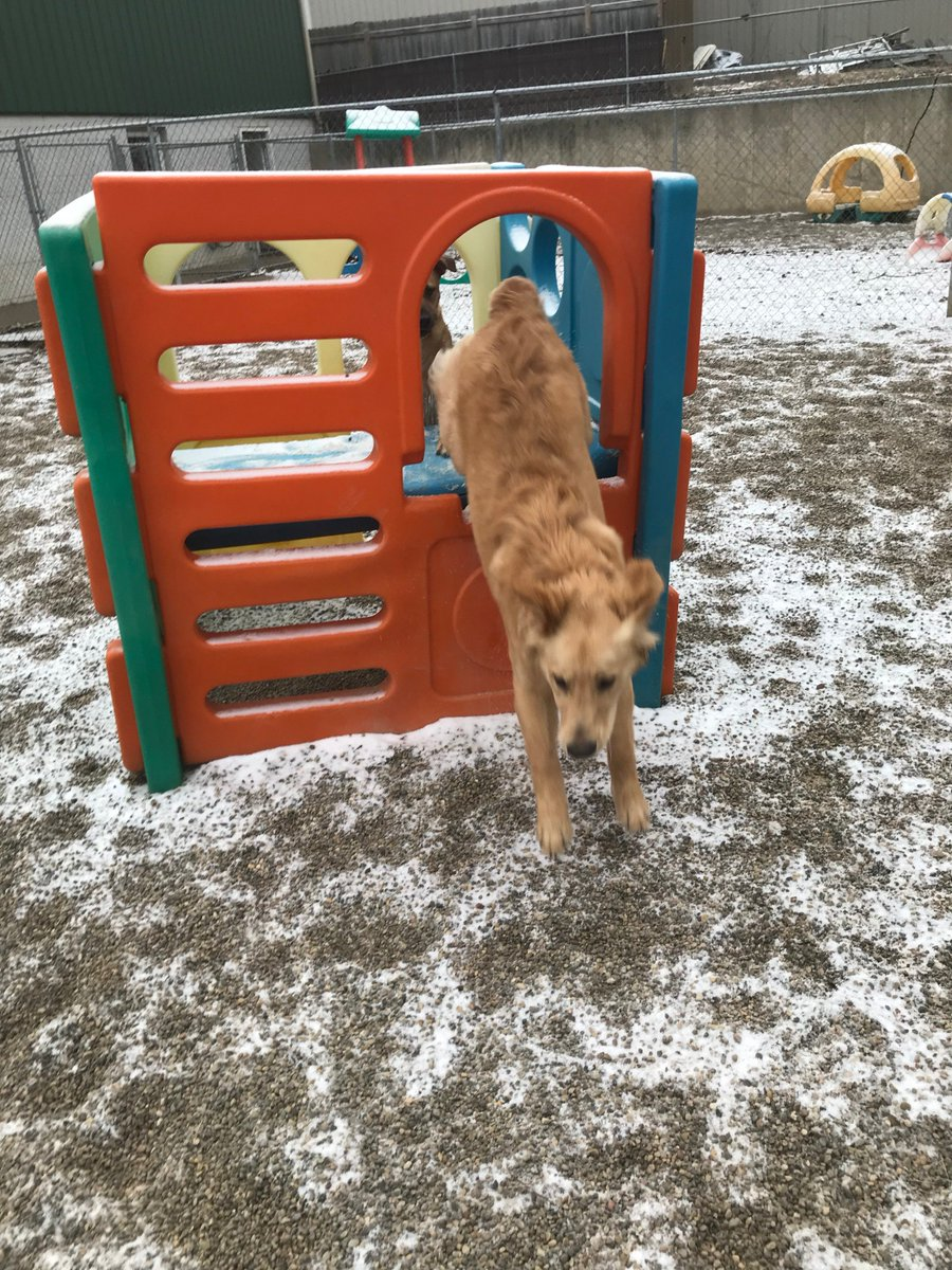 Gunner hops out of the play structure