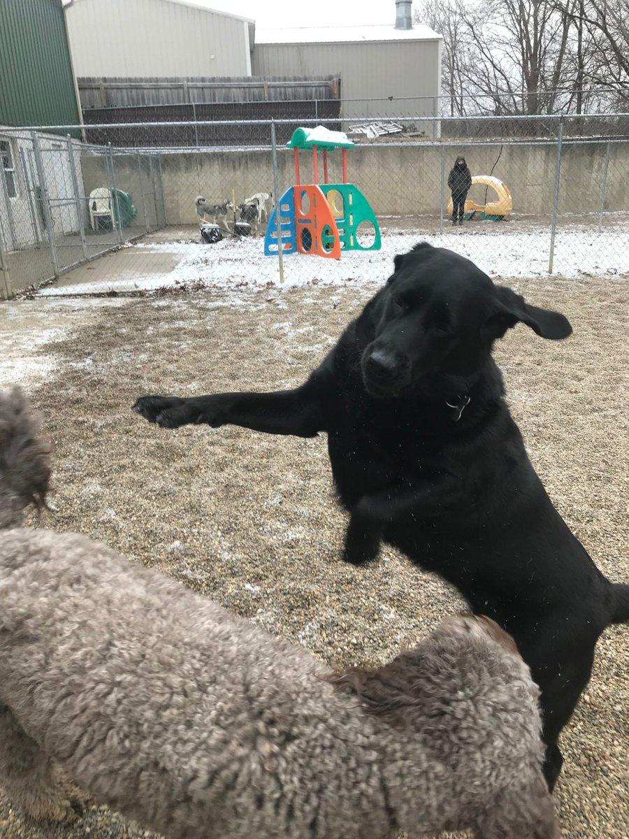 Greta shows Tucker her moves