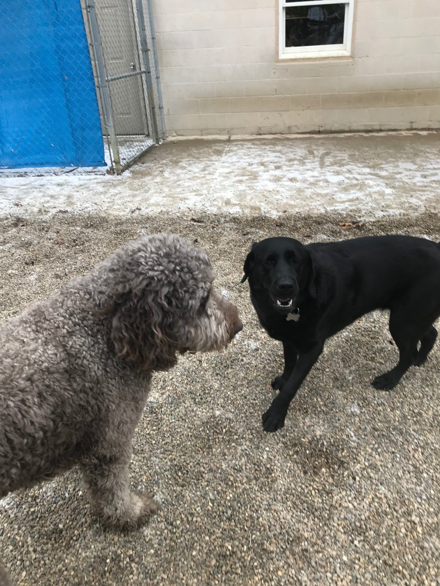 Greta loves playing with her buddy Tucker
