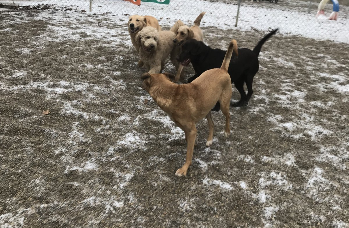 Gunner, Cooper D, Roxy, Leeloo and Zoe J are all smiles today