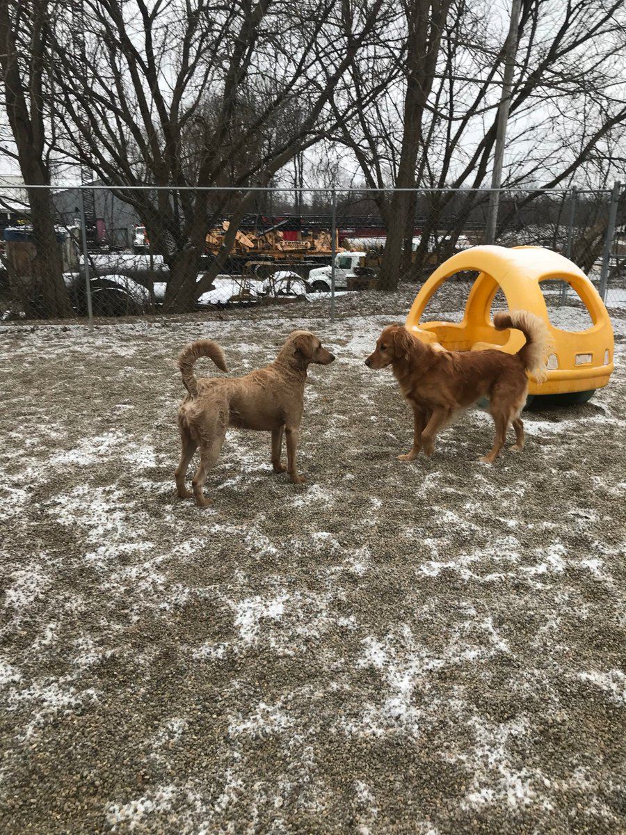 Leeloo and Maggie Mae get ready to play