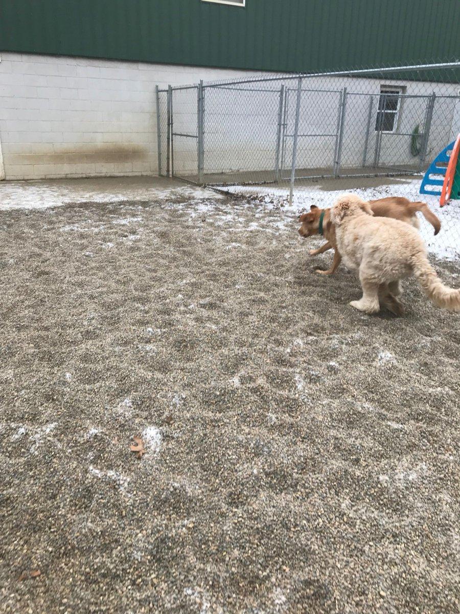 Riley H races after Kipling
