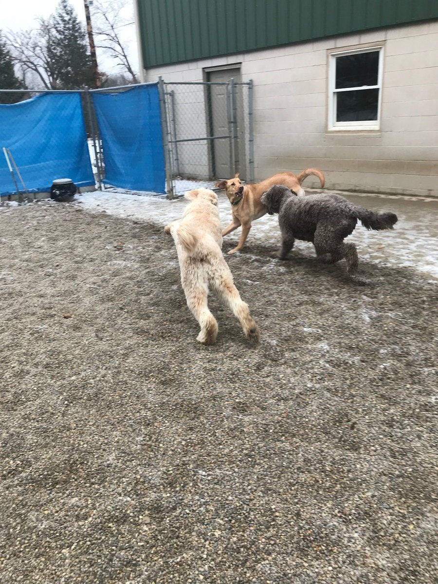 Kipling gets Tucker and Riley H to chase him