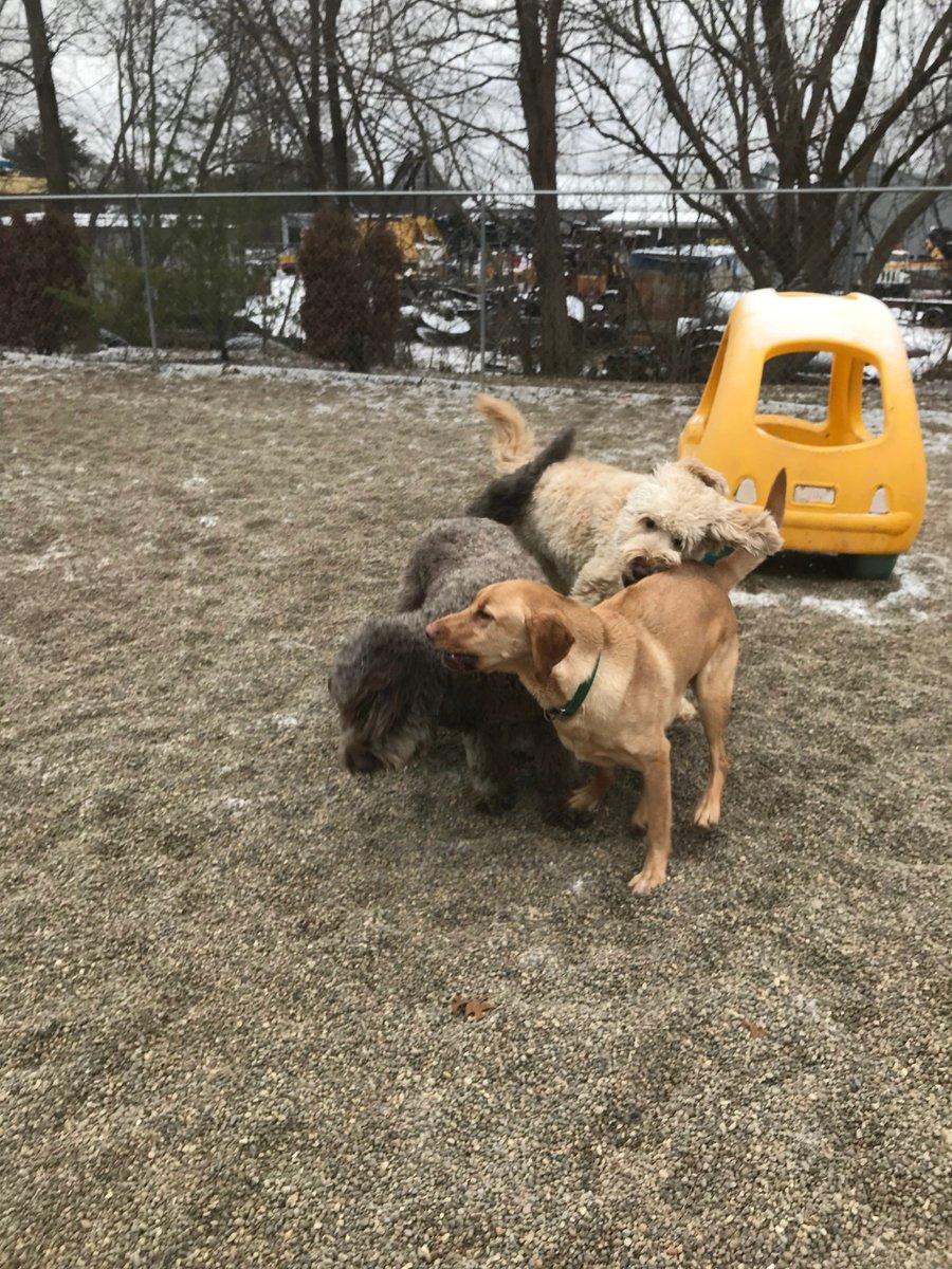Tucker, Riley H and Kipling race past