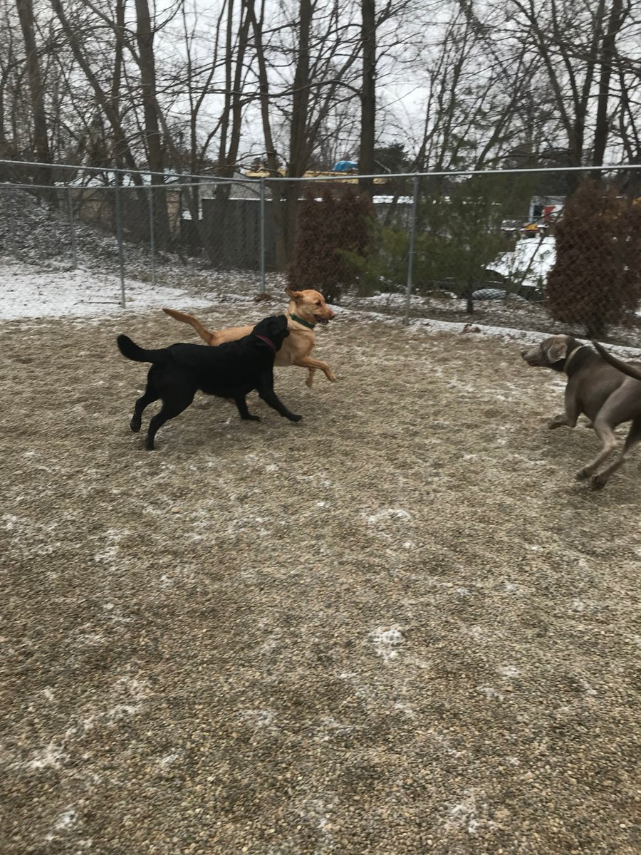 Kipling and Greta race in to play with Stitch
