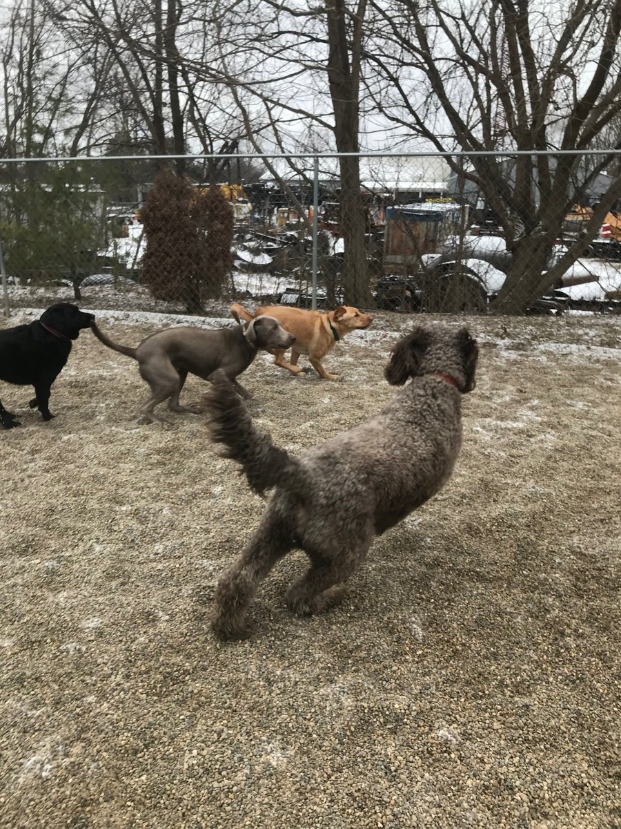 Tucker tries to catch up with Greta, Stitch and Kipling