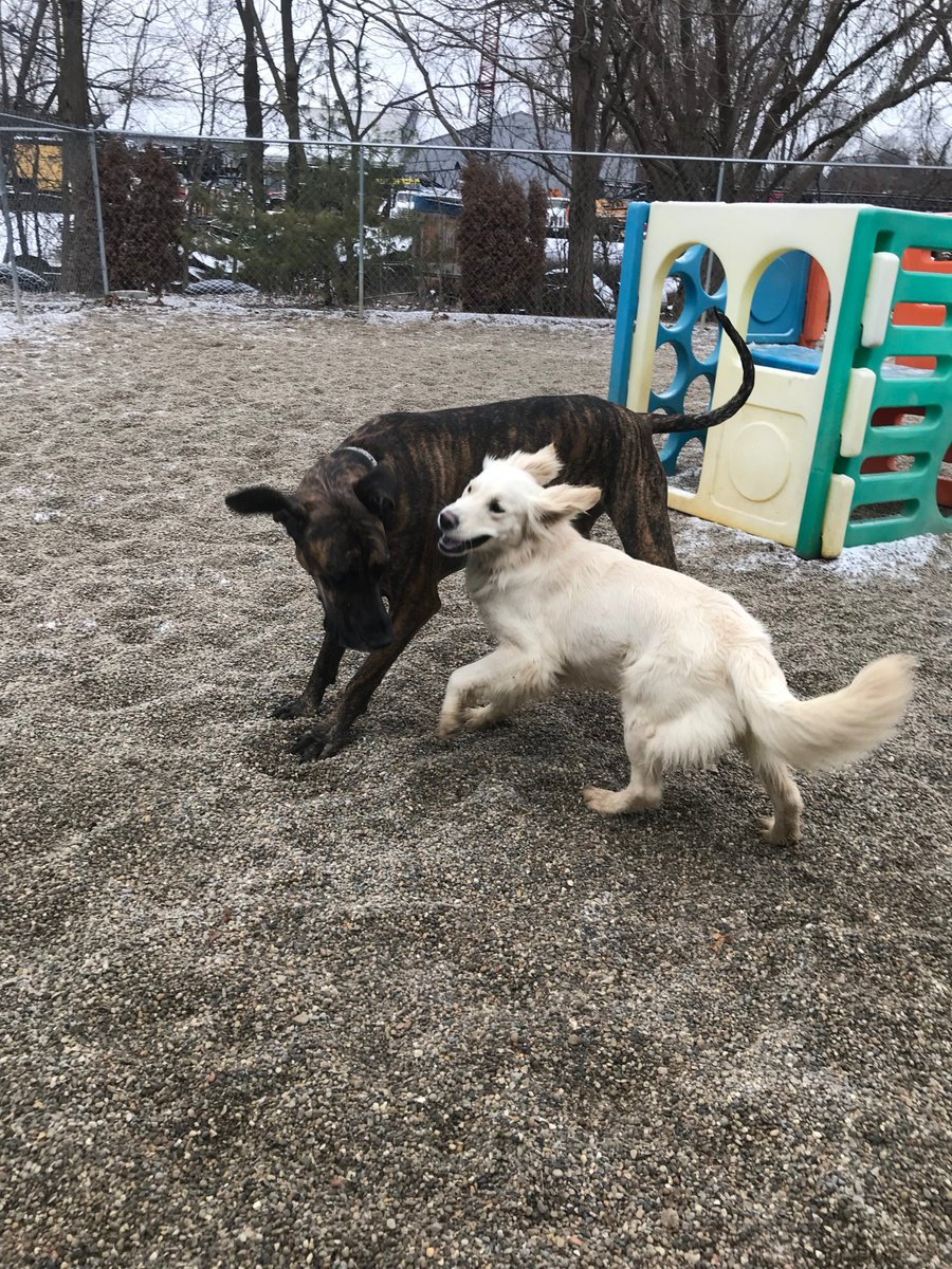 Breslin and Heimdall love playing together