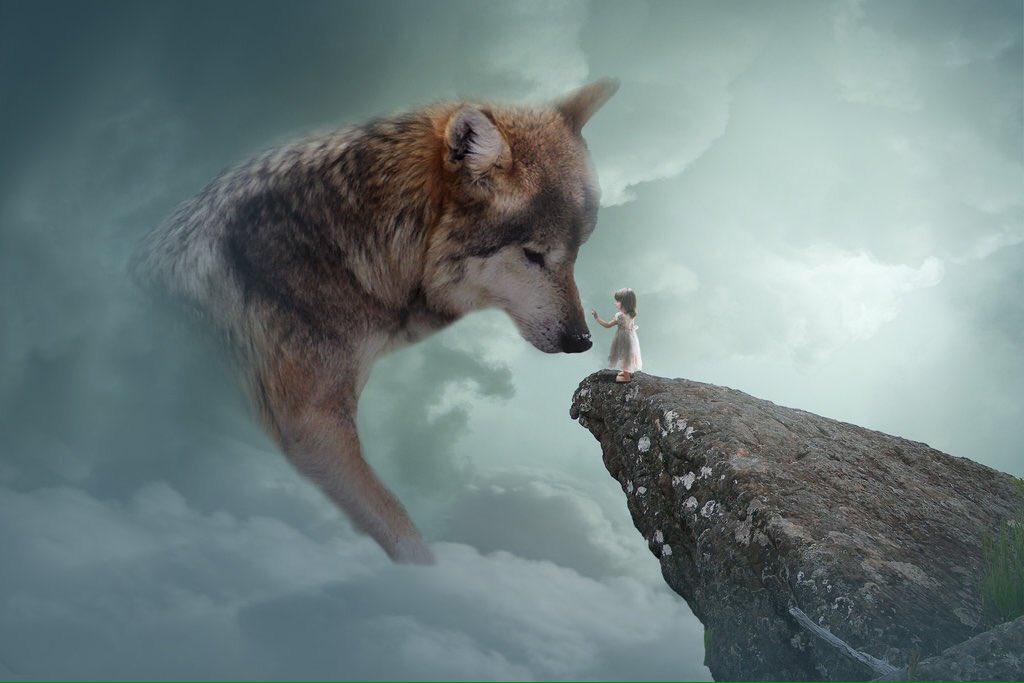 после картинки уходящего волка матка
